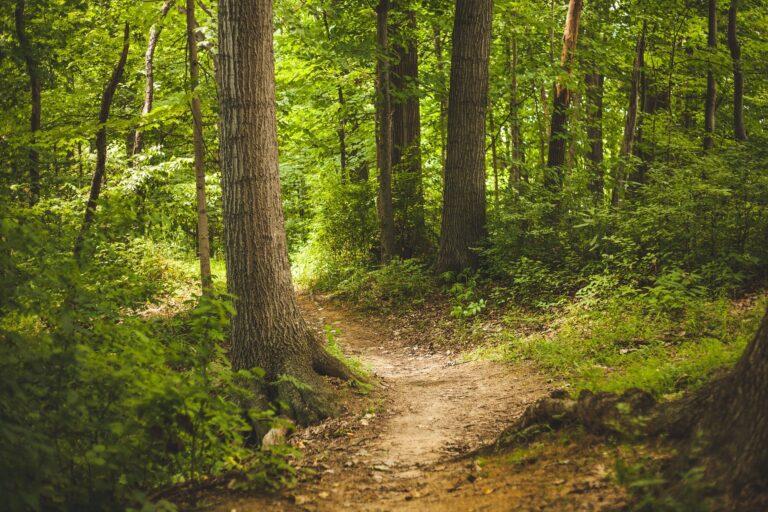 Wandern auf dem Hermannsweg: was ich gelernt habe