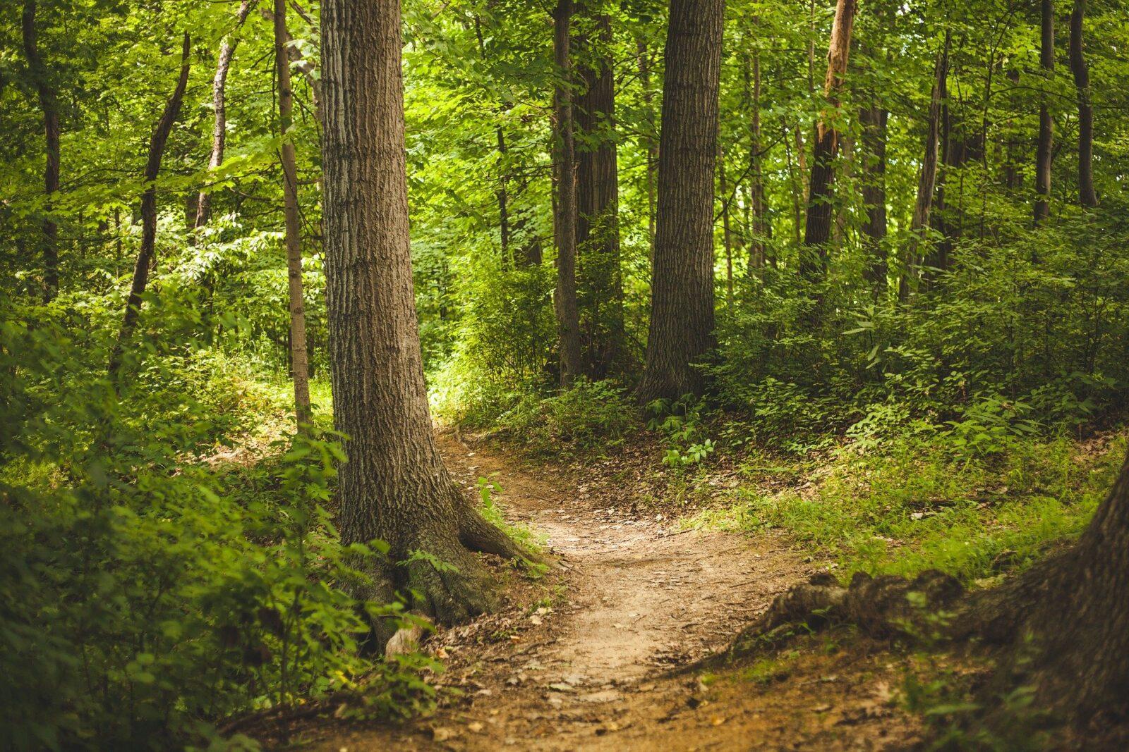 You are currently viewing Wandern auf dem Hermannsweg: 6 Lektionen, die ich dabei gelernt habe (mit Bildergalerie)
