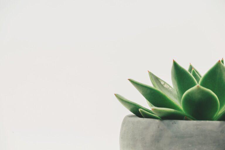 Warum Du Minimalismus ausprobieren solltest (die 9 größten Vorteile)