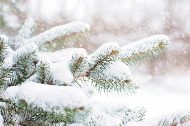 7 Wege, wie Du Weihnachten vereinfachen kannst