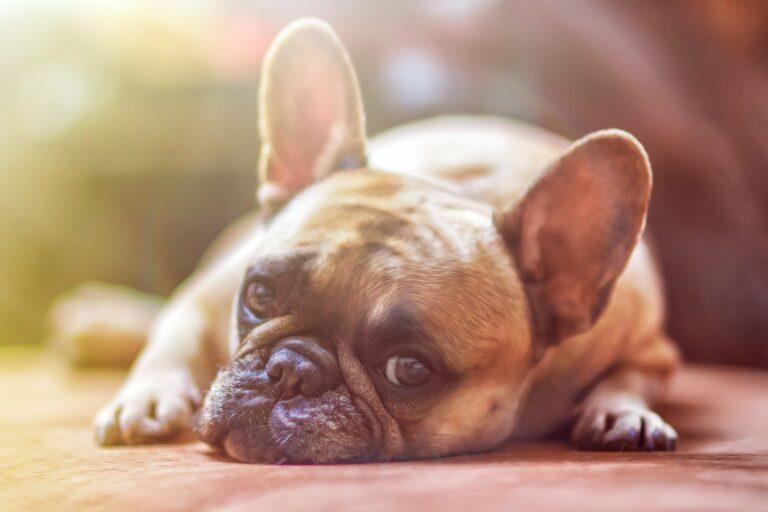 12 Tipps (plus Bonus) gegen die Lockdown-Langeweile